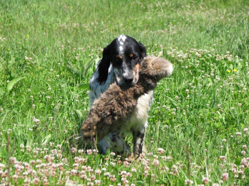 S atrapou králíka