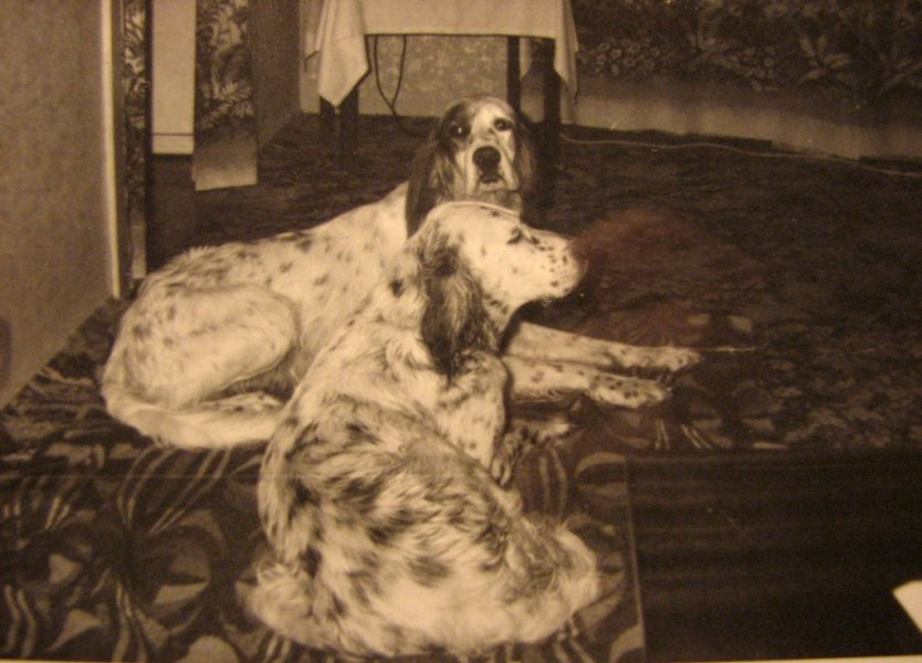 Dolly s Citem