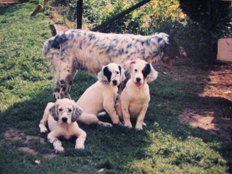 Ronny, Dart, Draga a Daisy