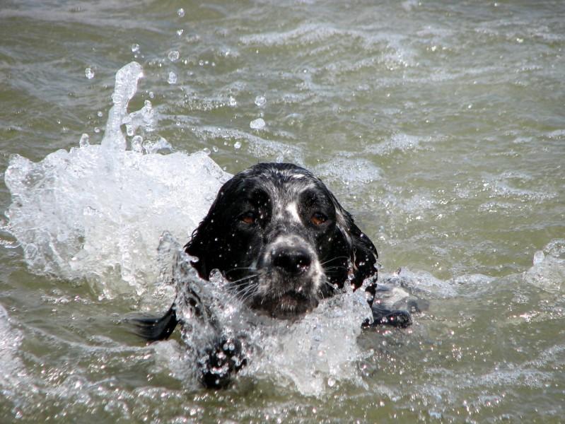 Eimee na vodě